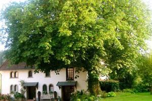 Cottage-Baum