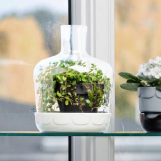 mini gew chshaus green landhaus look. Black Bedroom Furniture Sets. Home Design Ideas