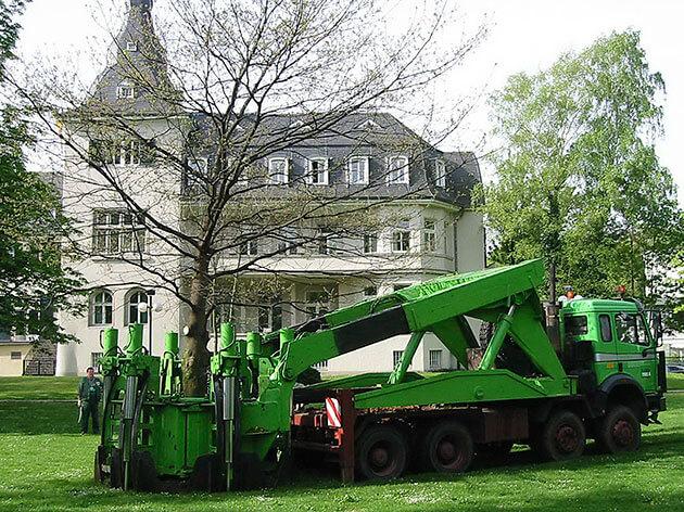Baum verpflanzen