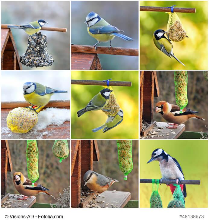 Freilebende Vögel brauchen unsere Hilfe, um den Winter gut zu überstehen
