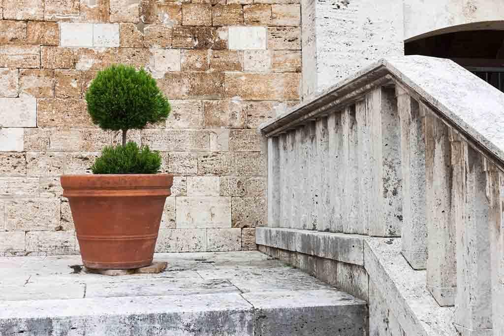 Eine Thuja verbreitet im Terracottatopf mediterranes Flair