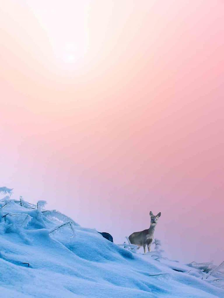 Farben des Jahres 2016: Zartes Rosa & kühles Blau