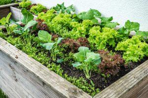 Hochbeet aus Holz mit Kräutern für Garten, Terrasse, Balkon