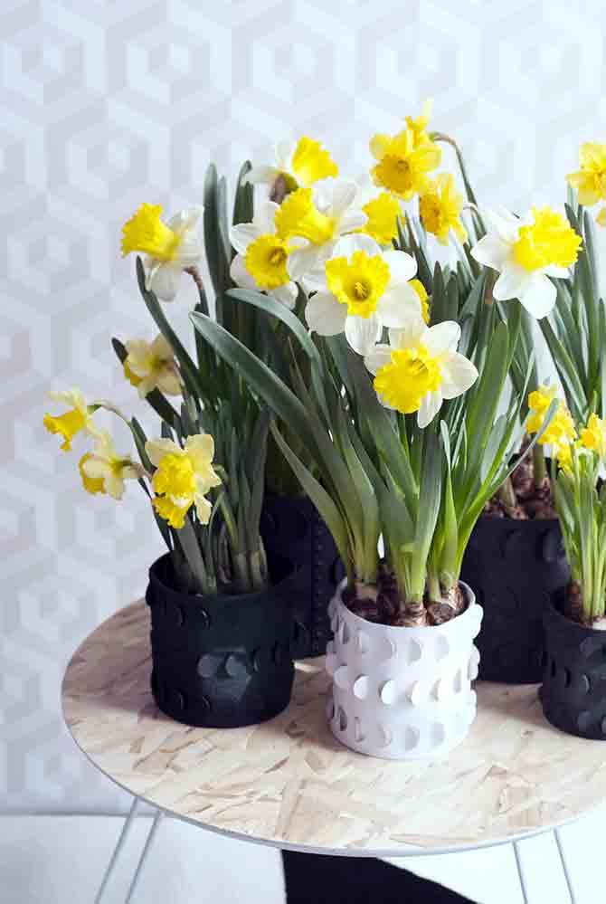 narzisse-kleine-vasen