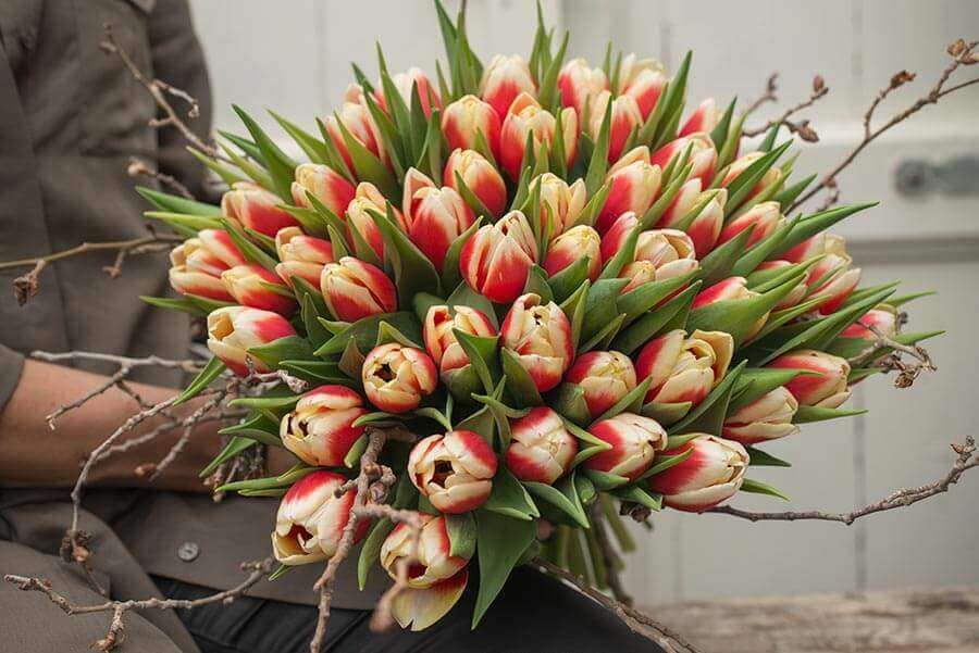 Besonders schön sieht die Kombination von Tulpen und Zweigen aus