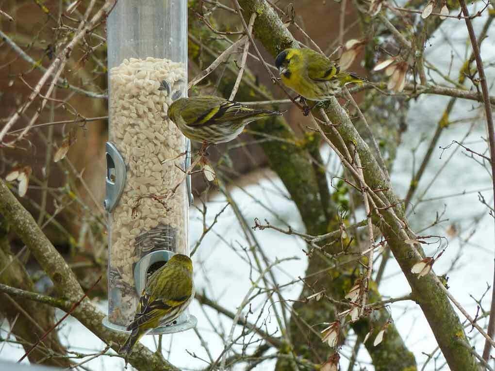 So werden Vögel im Winter richtig gefüttert