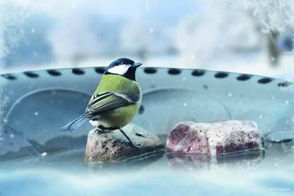 Gartenvögel haben auch im Winter mächtig Durst.