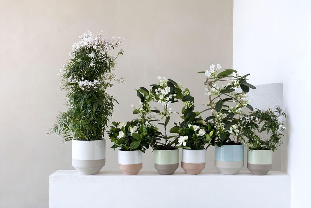 weiße blumen in vasen im skandinavischen landhausstil